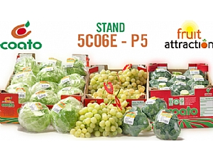 COATO EN LA FERIA INTERNACIONAL FRUIT ATTRACTION (MADRID)