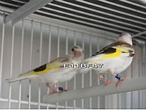 Aves disponibles 2017 y 2018 - Foto 67