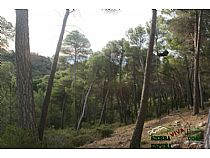 Pinos Donceles - Foto 4