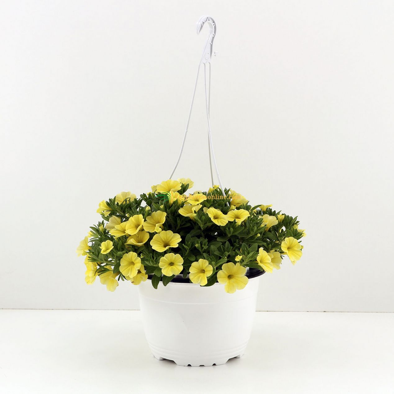 Calibrachoa tarrina 15